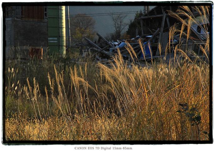 牧場の廃墟1911niigata0404.jpg