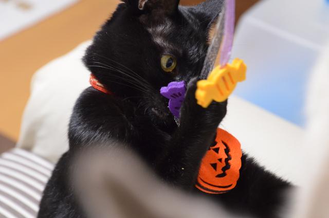 HalloweenToy2