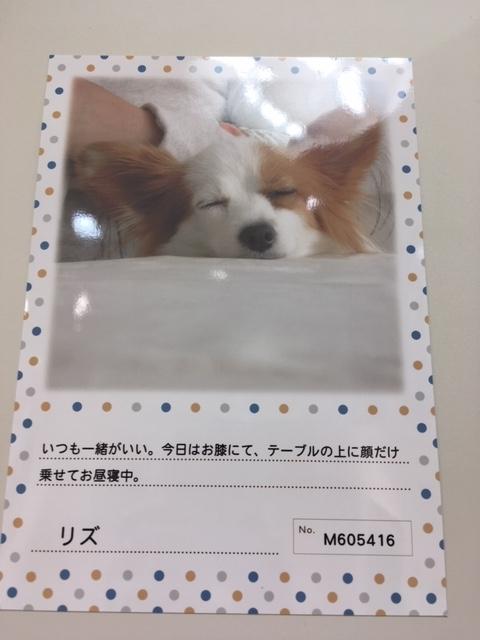 IMG_9463.jpg