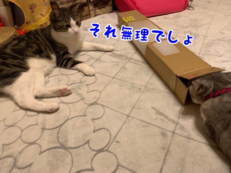 fc2blog_20190626163644e97.jpg