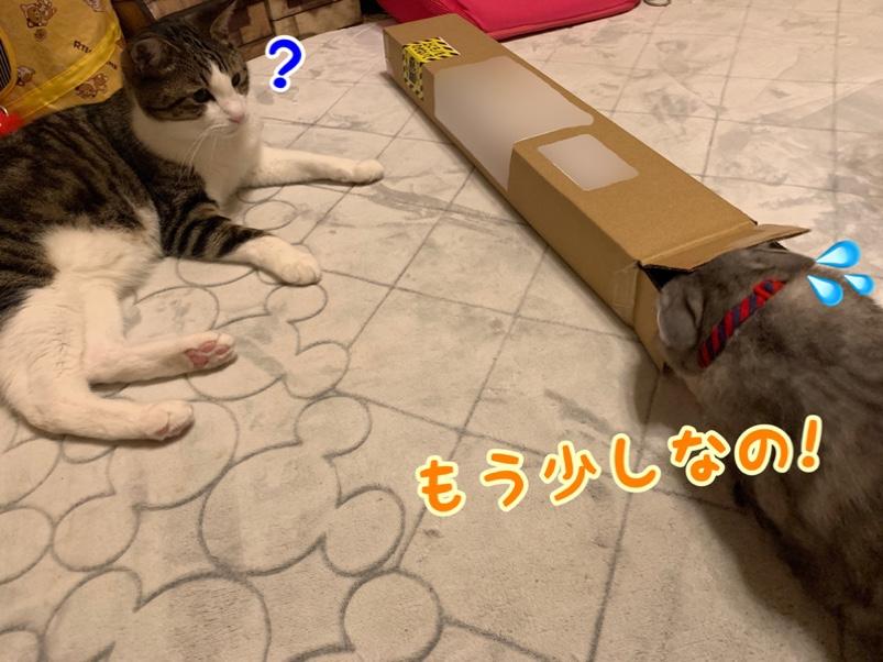fc2blog_20190626163754c2f.jpg