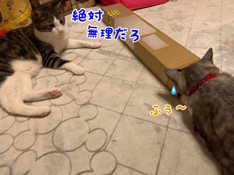 fc2blog_2019062616400244f.jpg