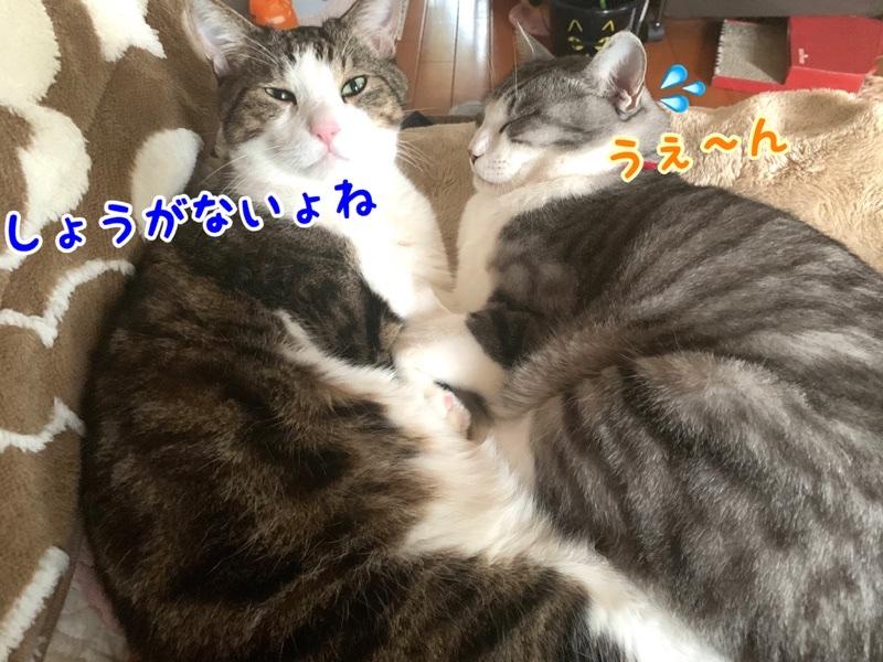 fc2blog_20191112205522193.jpg