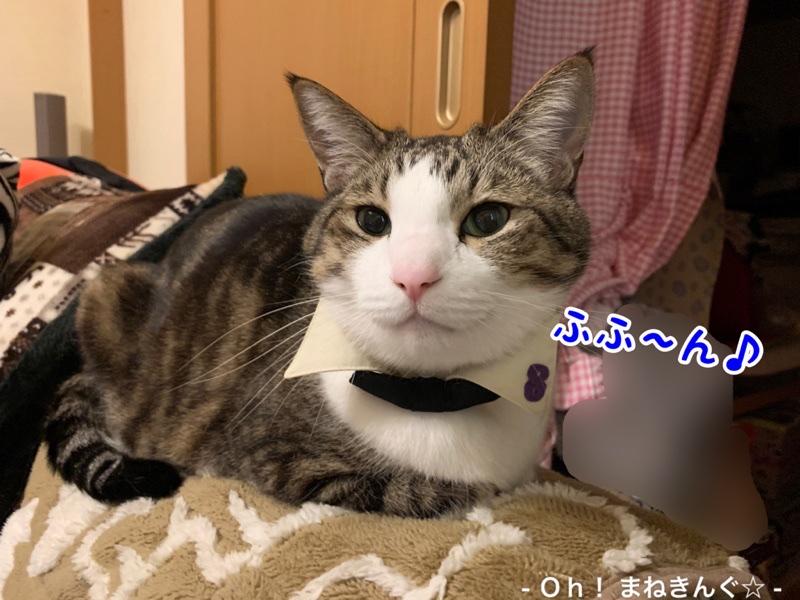 fc2blog_20200226185434ed3.jpg