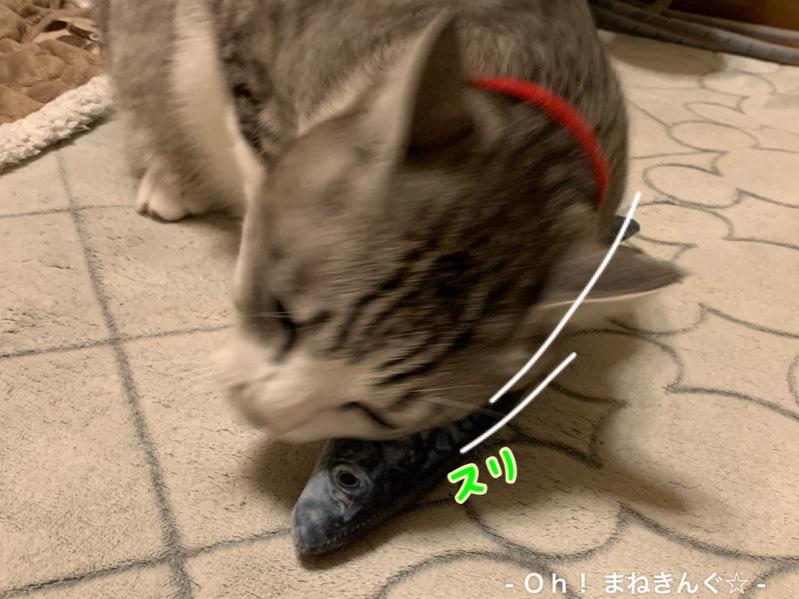 fc2blog_202002270109532ff.jpg
