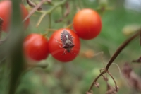 BL190823畑の虫2IMG_6018