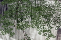 BL190825布引の滝4-6IMG_6150