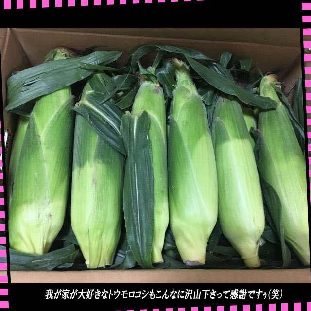 円トウモロコシ