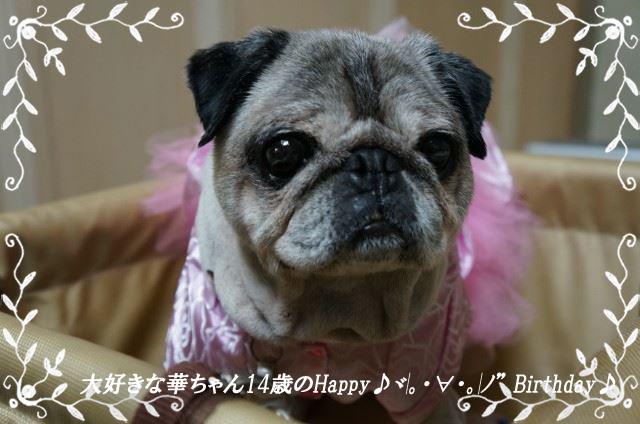 円華誕生日