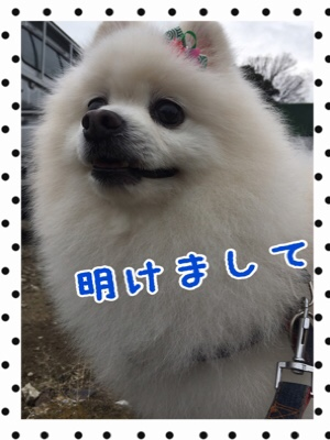 fc2blog_20200104164707b62.jpg