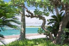 沖縄 海岸 海辺 木陰 涼風