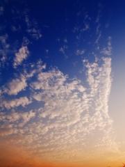 秋 いわし雲 鰯雲
