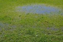 雨水 土脉潤起
