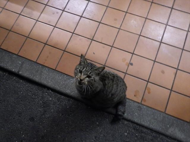 コンビニの猫-1