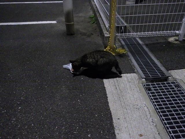 コンビニの猫-2
