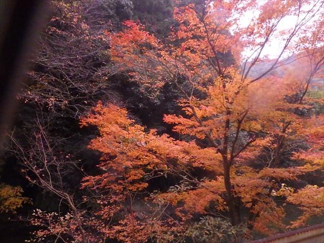 伊良原ダム-5 紅葉 変更グラス越しで撮影