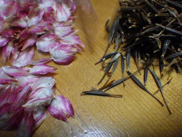 センニチコウとキバナコスモスの種-2