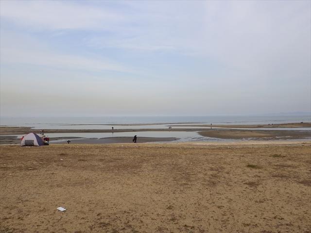 簑島の浜辺で大勢がマテガイ掘り