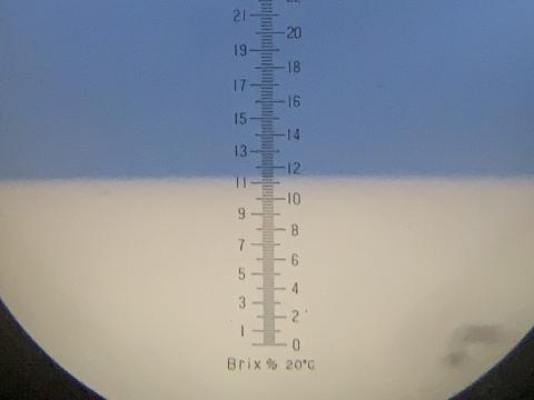 八朔の糖度(11.4度)