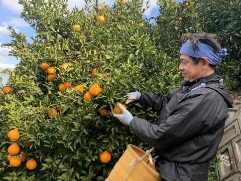 収穫の様子(YUICHIRO)