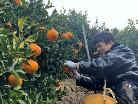 収穫の様子(MOEGI)