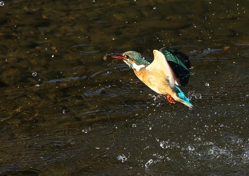 魚付き (4)