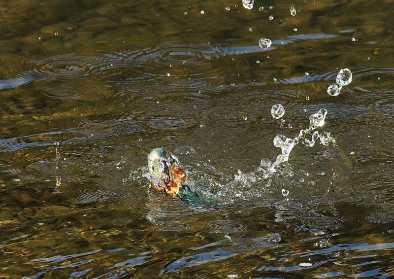 魚付き (2)