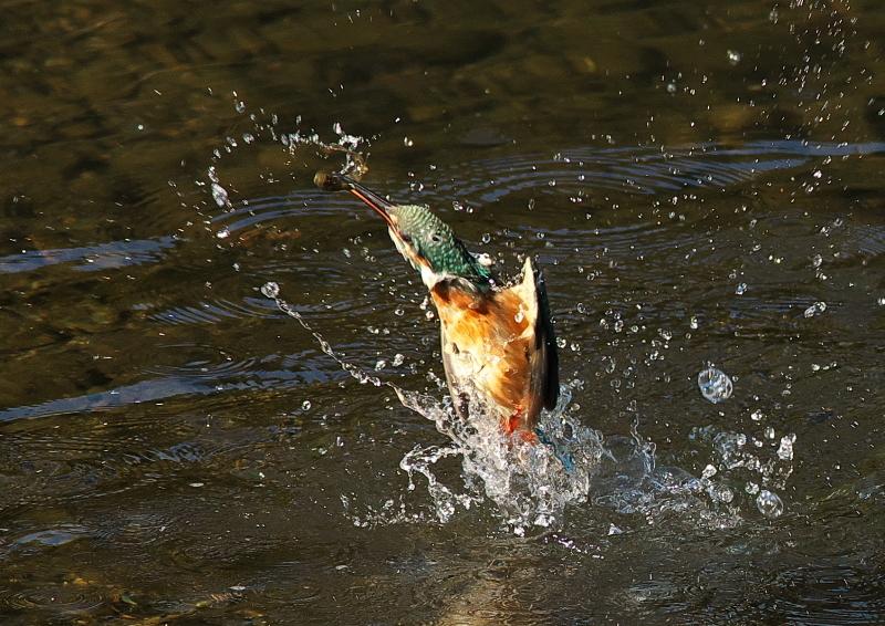 魚付き (3)