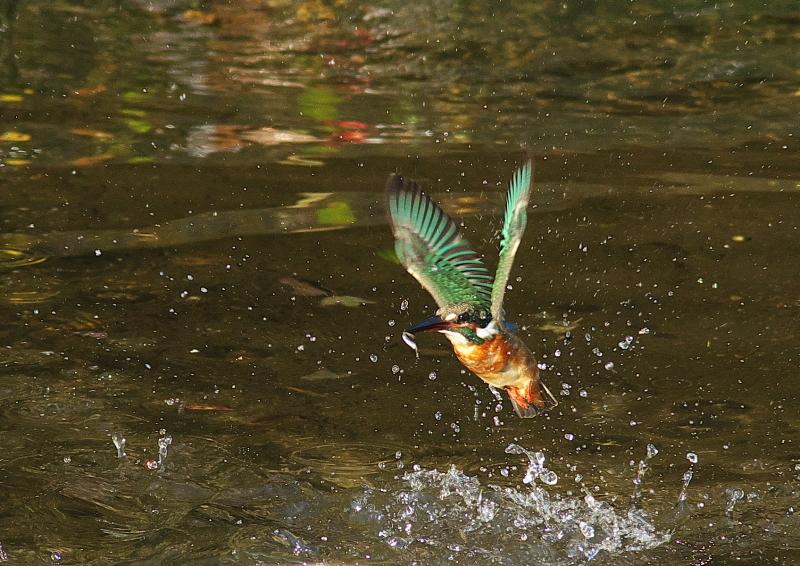 小魚 (4)