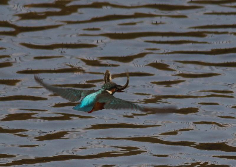 魚付き後ろ (4)