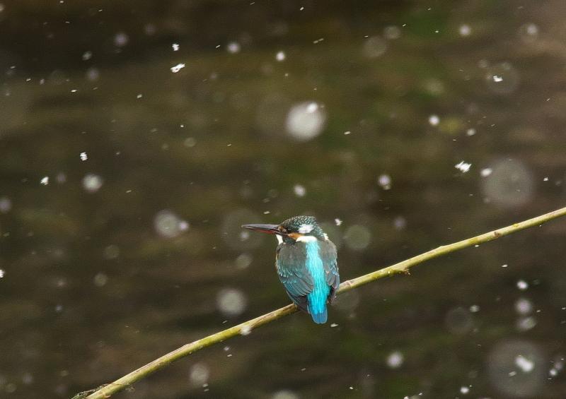 雪カワ (2)