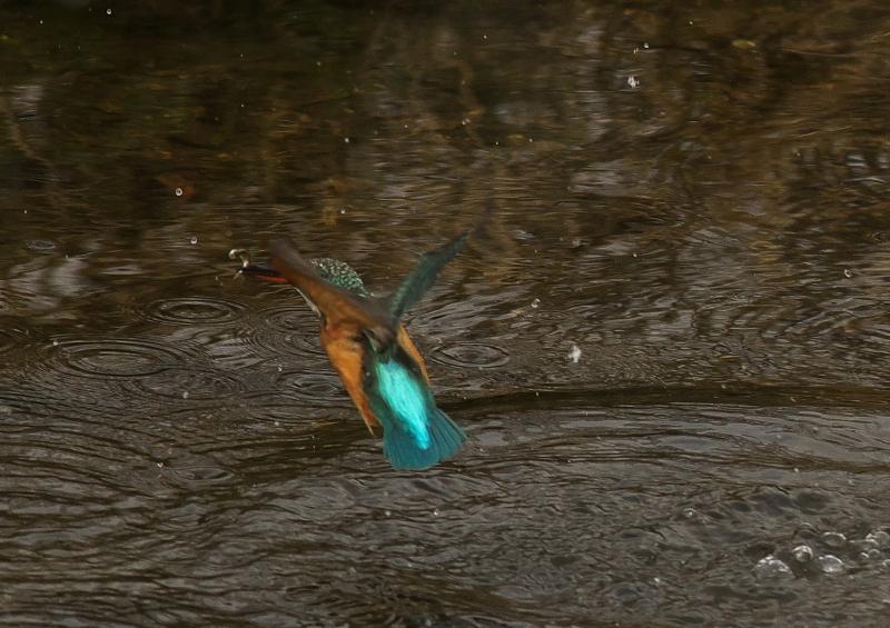 雪カワ 魚 (4)