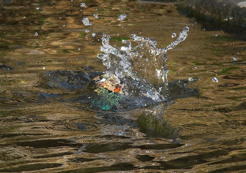 魚 (1)
