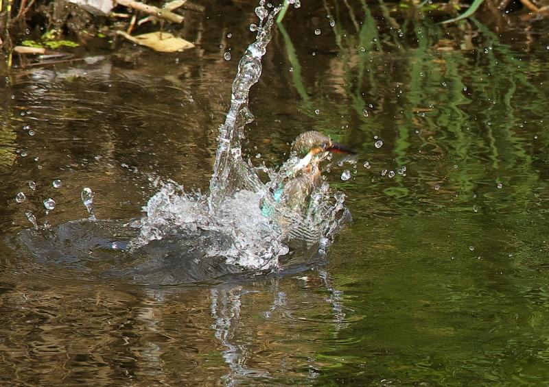 変則水浴び (1)