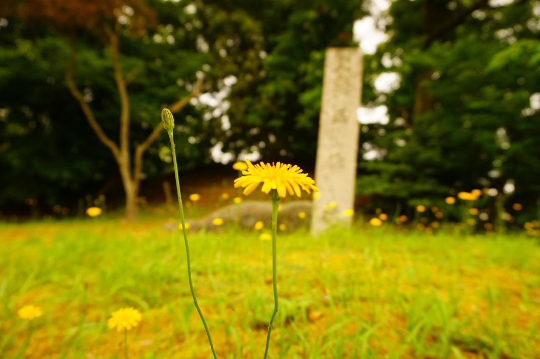 15 黄色い花