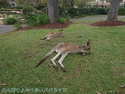 australia2019086.jpg