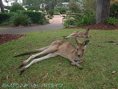 australia2019087.jpg