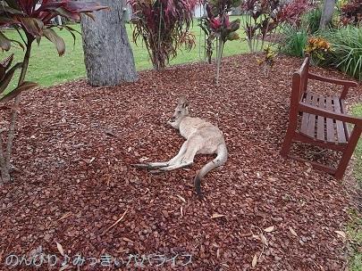 australia2019088.jpg