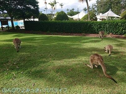 australia2019094.jpg
