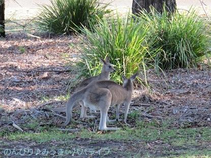 australia2019112.jpg