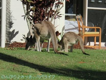 australia2019113.jpg
