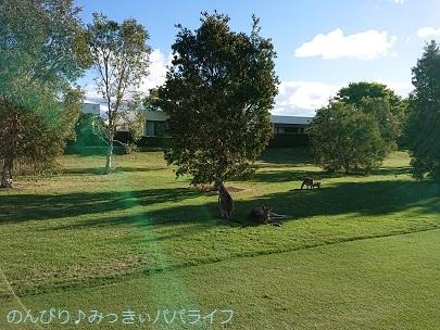 australia2019142.jpg