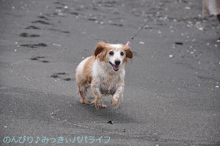tateyama201907037.jpg