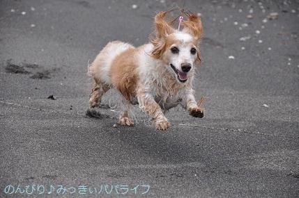 tateyama201907038.jpg