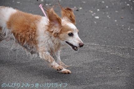tateyama201907039.jpg