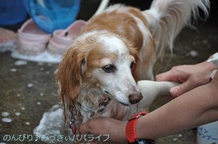 tateyama201907043.jpg
