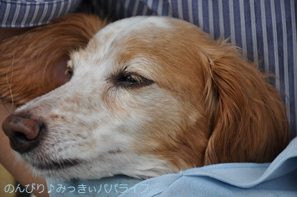 tateyama201907045.jpg