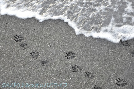 tateyama201907053.jpg