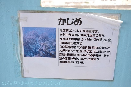 tateyama201907110.jpg