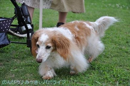tateyama201907113.jpg